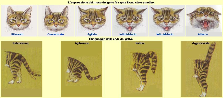 Eccezionale Gatto::. TB52