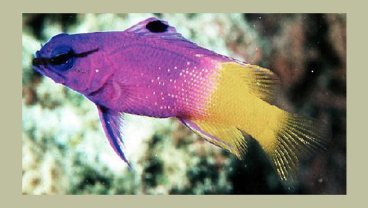 Pesci for Pesci acqua fredda piccoli