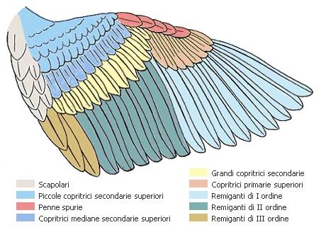 Anatomia de las Aves